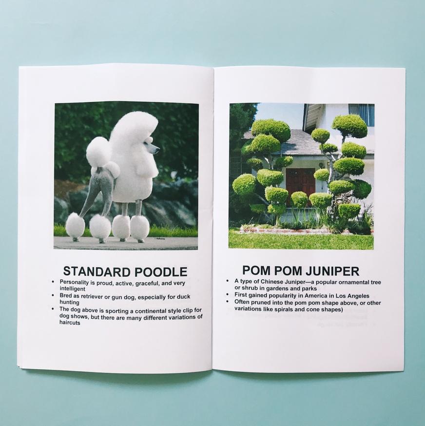 Dogs + Plants thumbnail 5