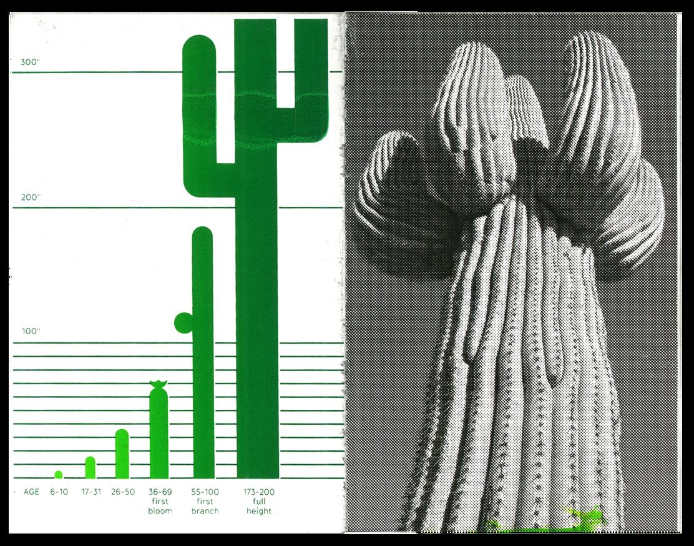 Saguaro thumbnail 7