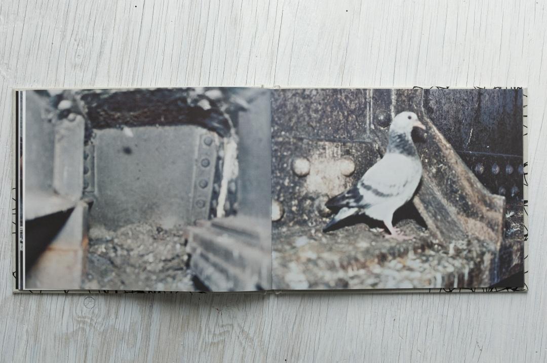 Pigeons thumbnail 6