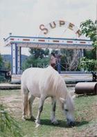Chinese Super Pony
