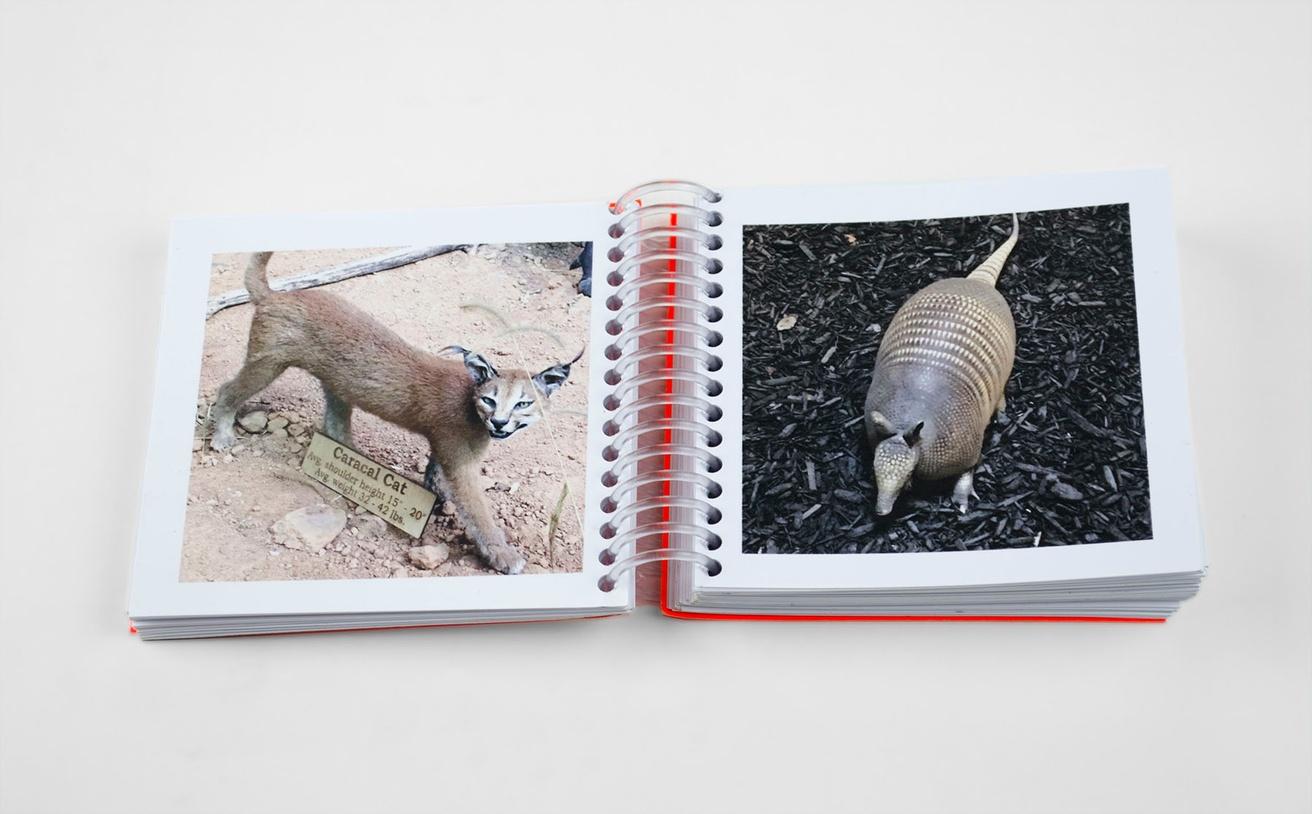 Animals I Shot at Cabela's thumbnail 3