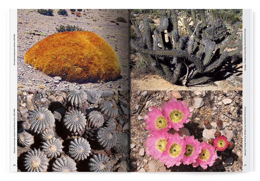 Xerophile: Cactus Photographs from Expeditions of the Obsessed thumbnail 5