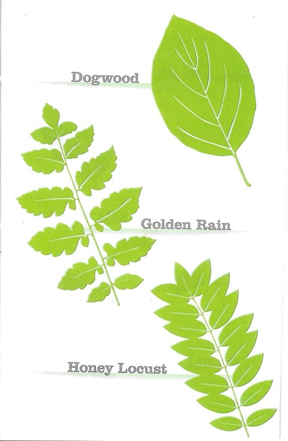 New York Leaf Directory