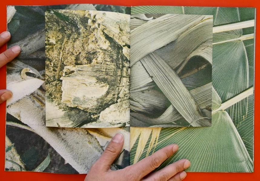 Palmeral  thumbnail 2