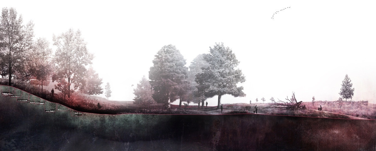 Rendering of a site plan for landscape, showing the underground root systems.