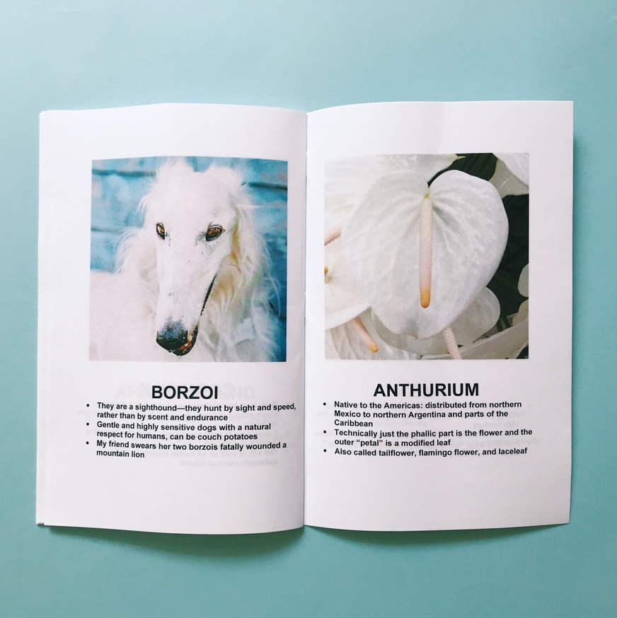 Dogs + Plants thumbnail 4
