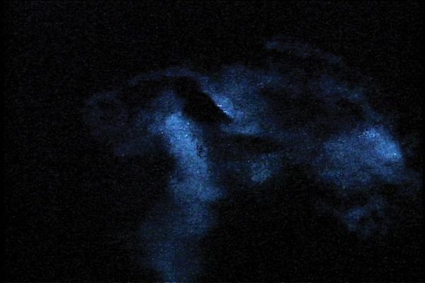 Gainer Luna.jpg