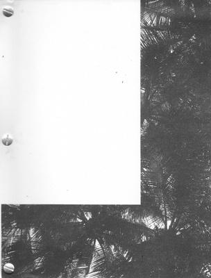 Afuera en el estacionamiento, soles, amores, palmeras