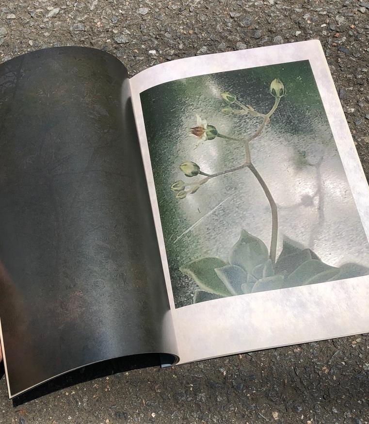 The Garden of Photographs thumbnail 4