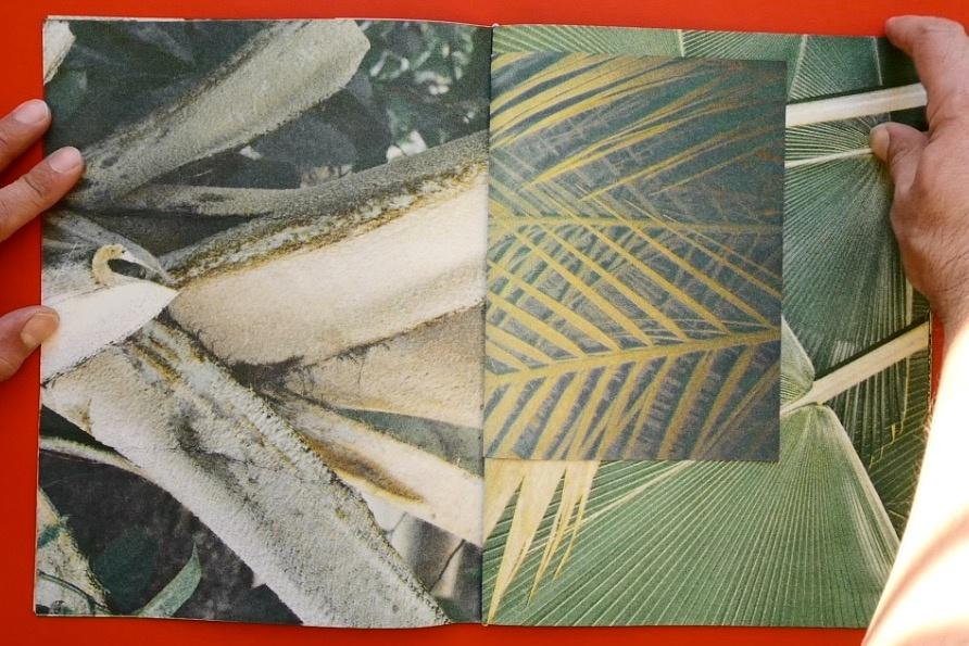 Palmeral  thumbnail 4
