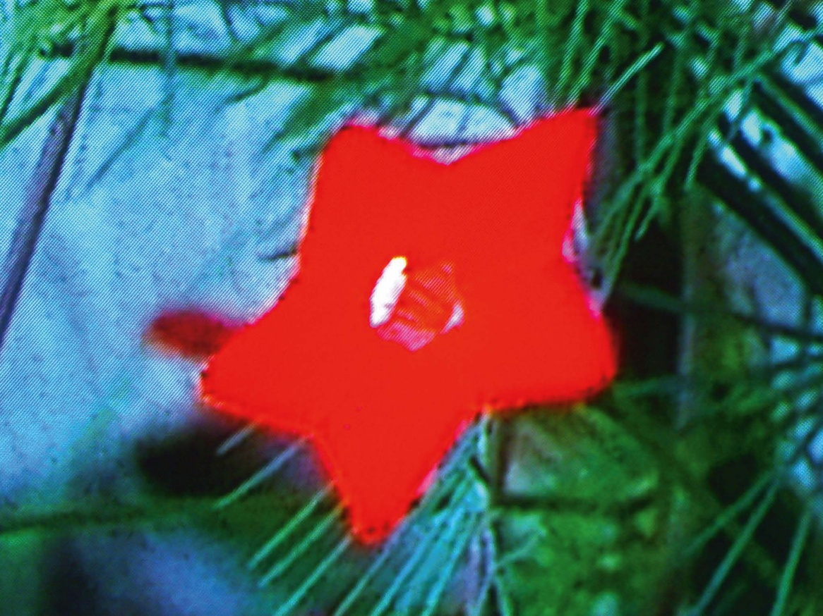Television Flowers thumbnail 3