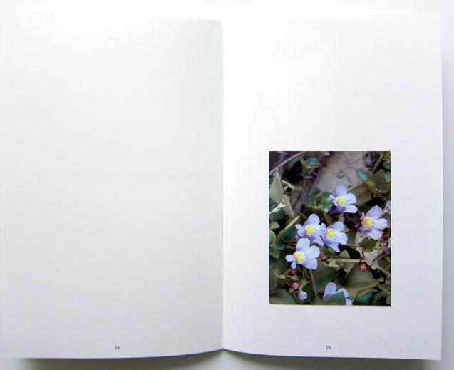 Flore de compagnie thumbnail 4