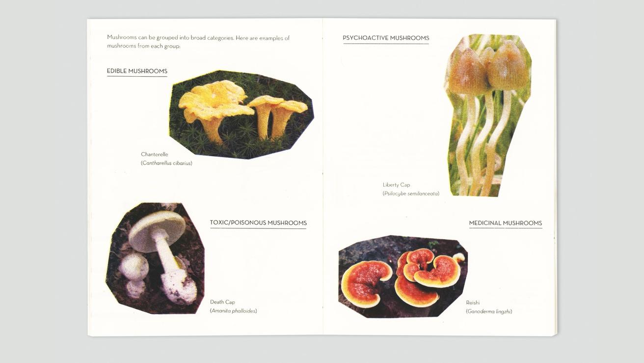 Mushrooms thumbnail 2