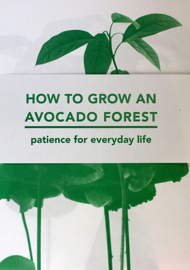 How to Grow an Avocado Forest