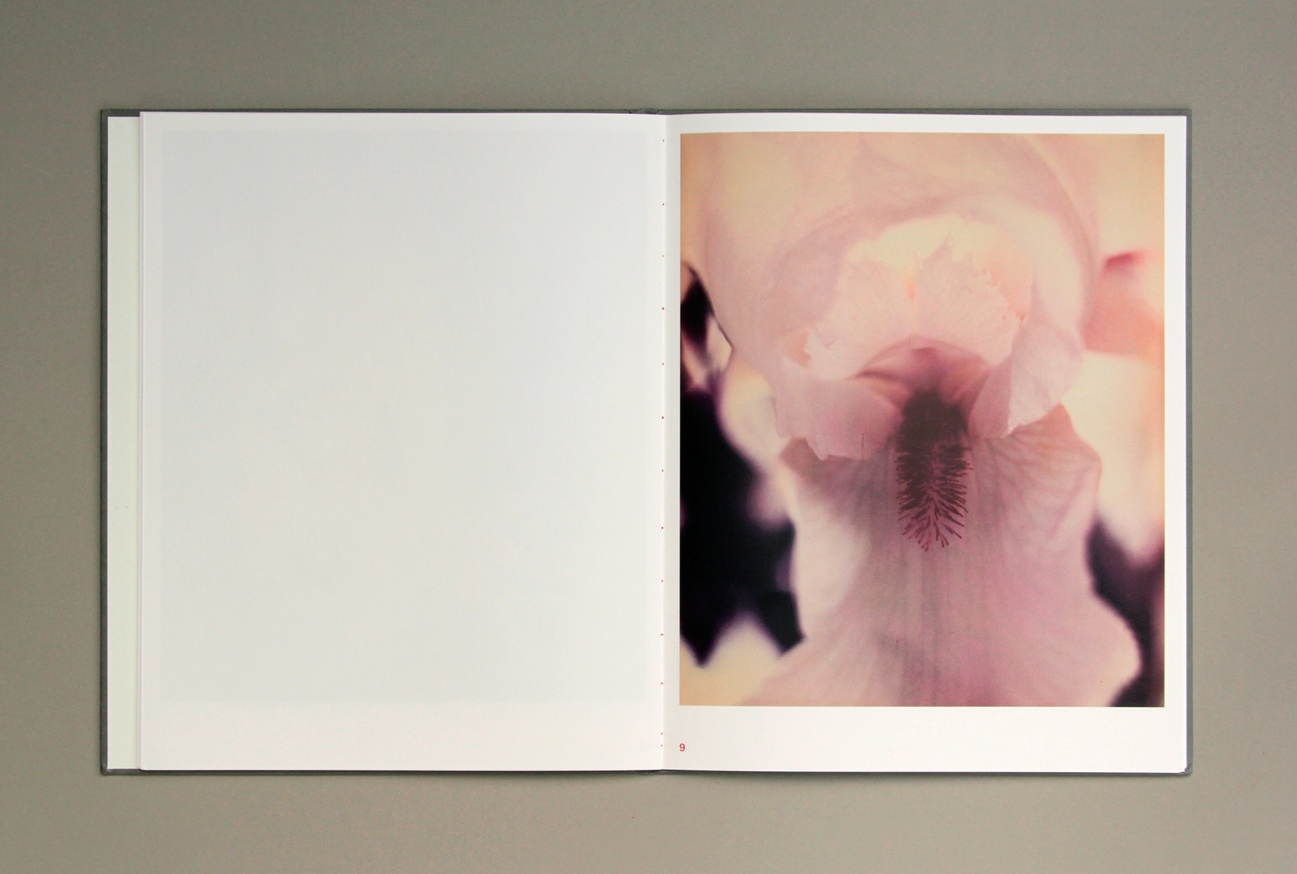 Gėlės thumbnail 4