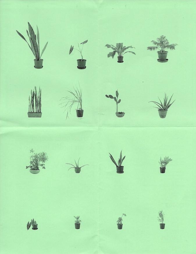 Variaciones acerca de un jardín interno thumbnail 3
