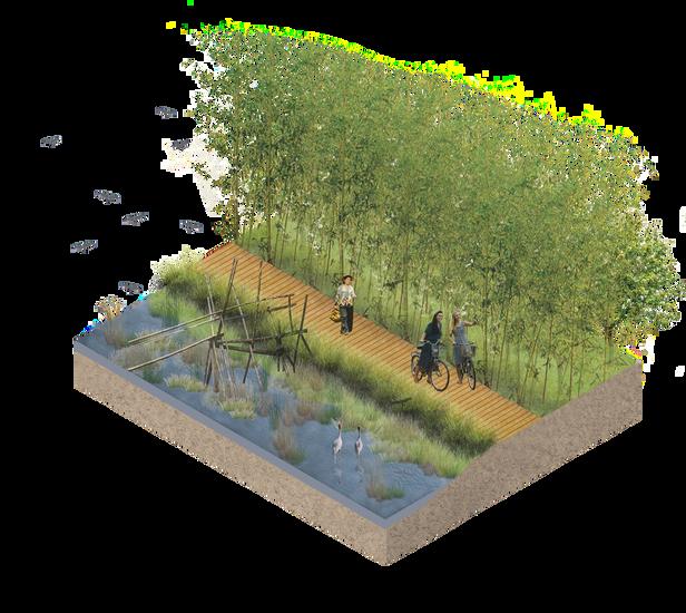 Linear Wetland