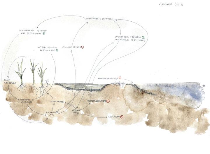 Landscape diagram showing soil and plant conditions.