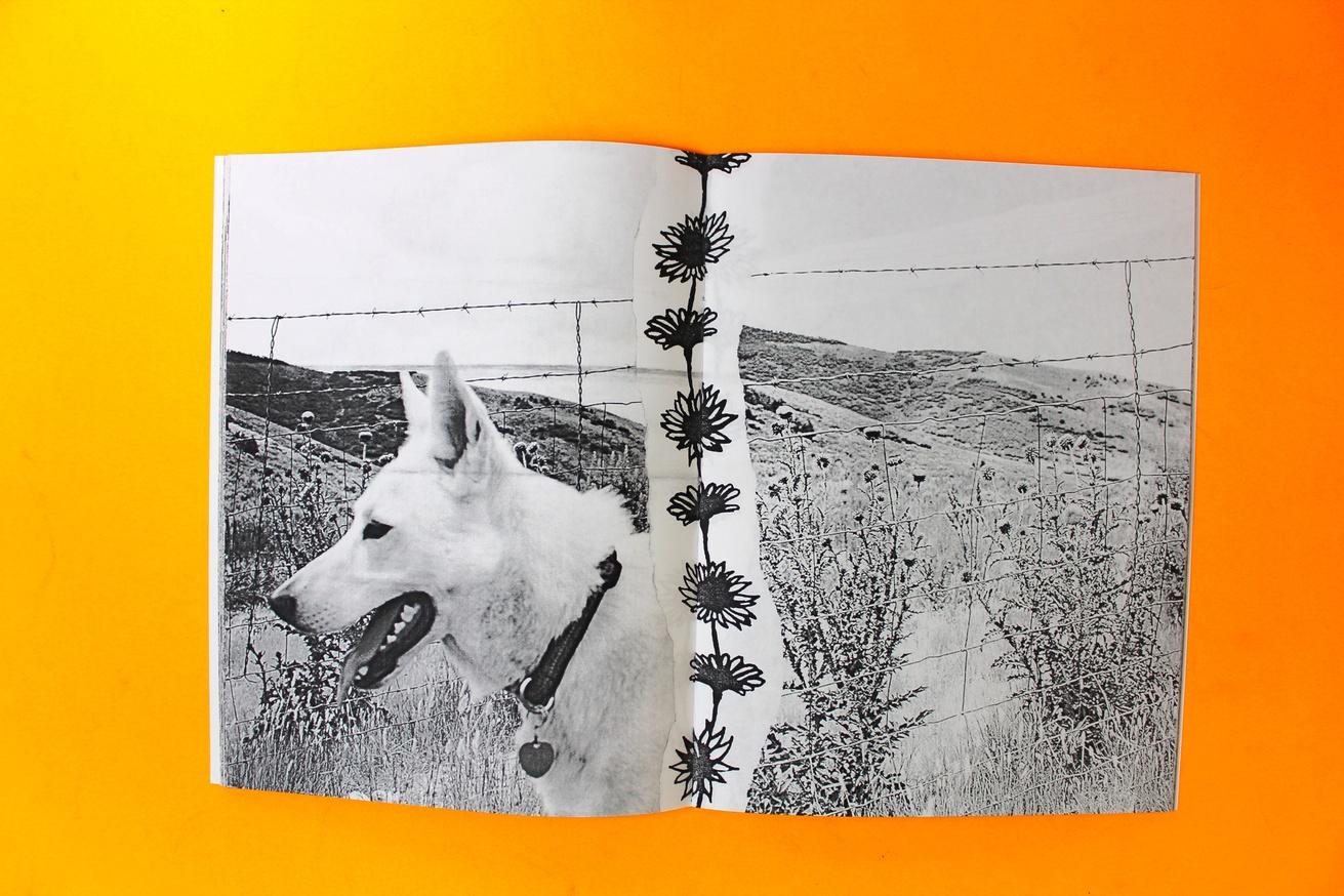 Ditch Daisies thumbnail 5