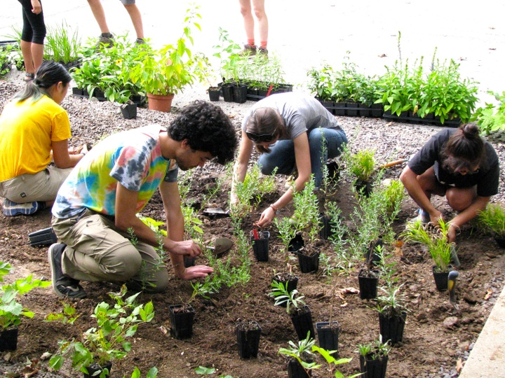Several people work together to plant seedlings in a garden.