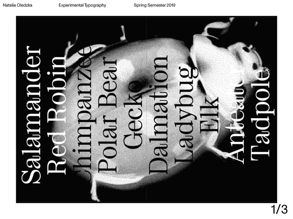 Experimental Typography FInal 45.jpg