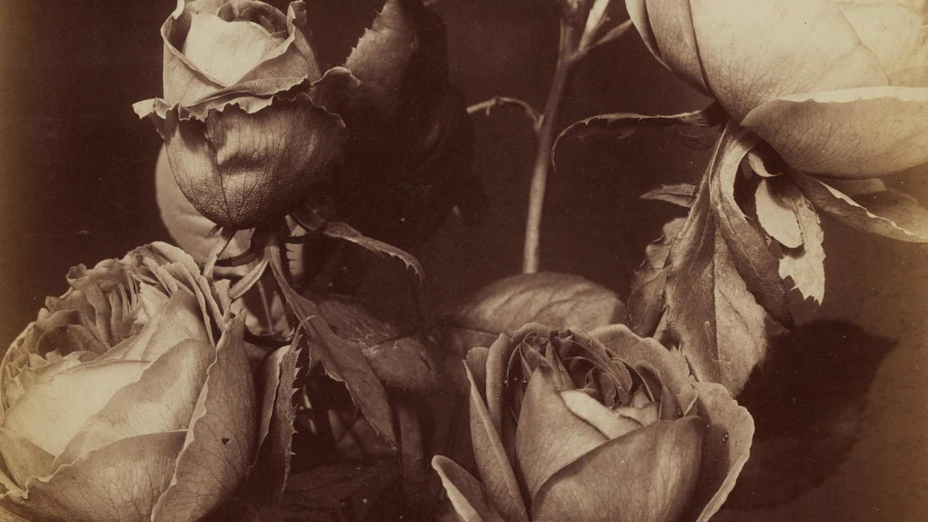 A black-and-white photograph shows a bouquet of mixed roses at various stages of decay against a dark backdrop.