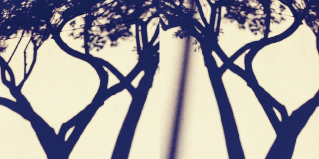 Shadow Trees thumbnail 5