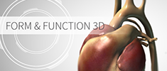 Form and Function 3D