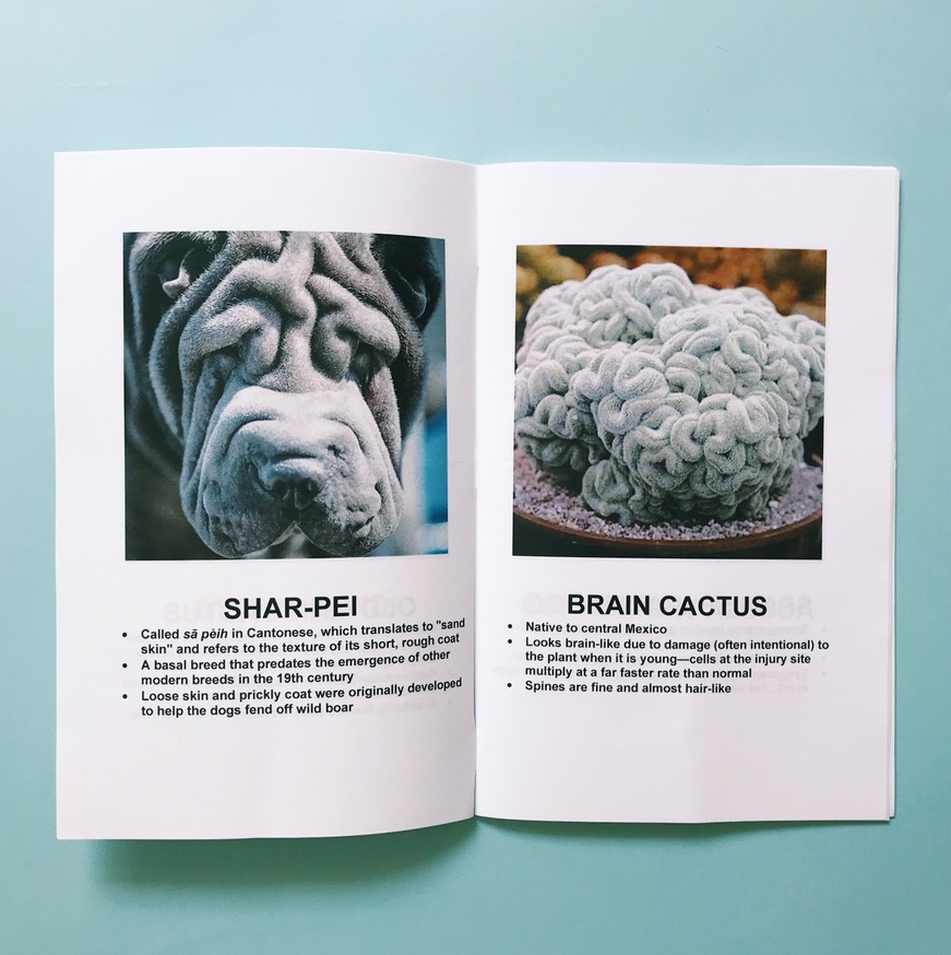Dogs + Plants thumbnail 2