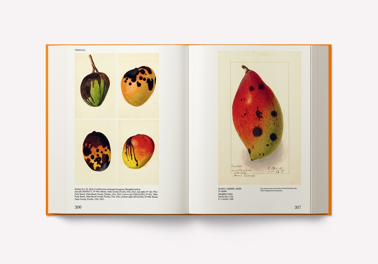 An Illustrated Catalog of American Fruits & Nuts: The U.S. Department of Agriculture Pomological Watercolor Collection thumbnail 5