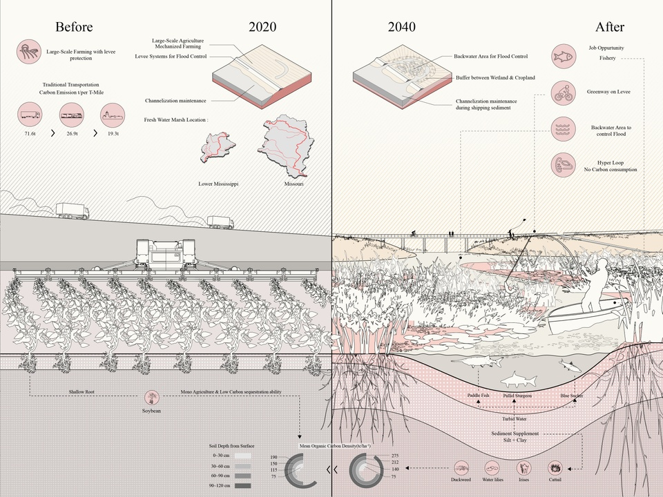 Rendering illustrating before and after effects of restoration of fresh water marshes from 2020 to 2040.