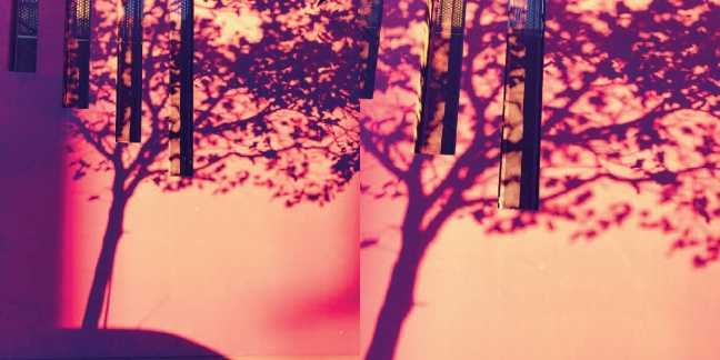 Shadow Trees thumbnail 2