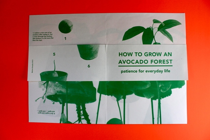 How to Grow an Avocado Forest thumbnail 2
