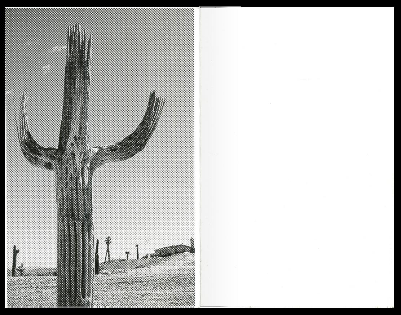 Saguaro thumbnail 6