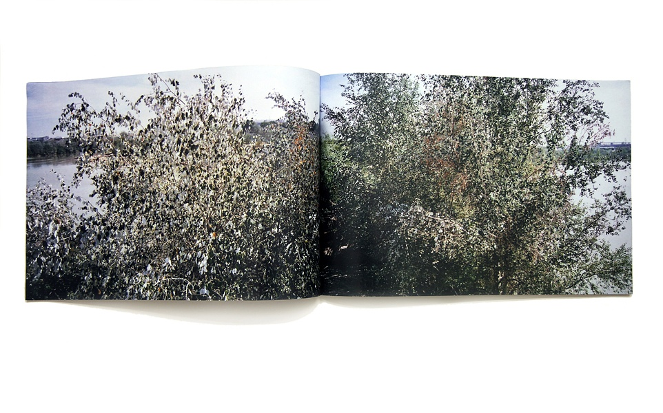 River Trees thumbnail 4