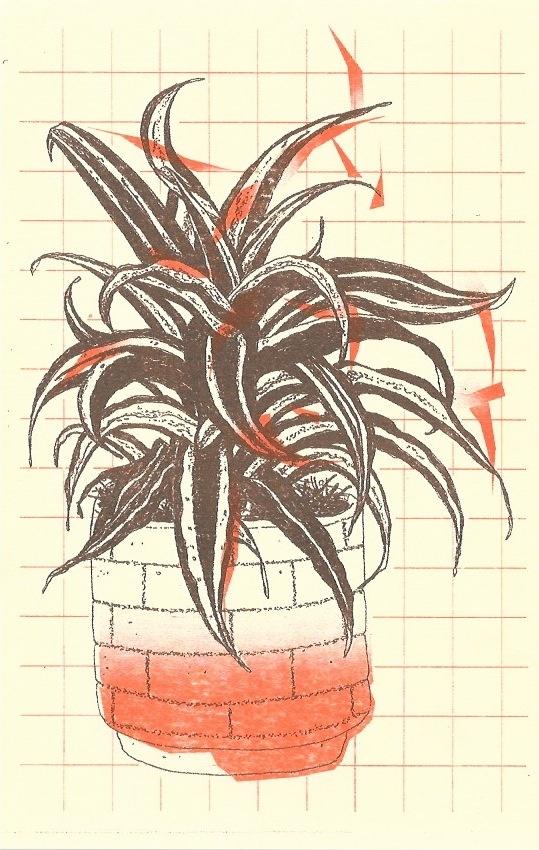 Plantas thumbnail 3