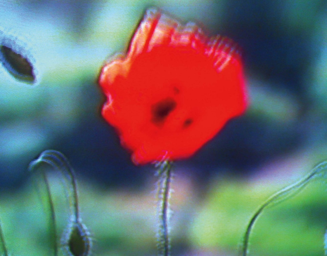Television Flowers thumbnail 4