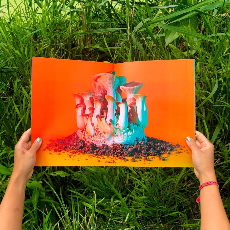 Mushrooms & Friends thumbnail 4