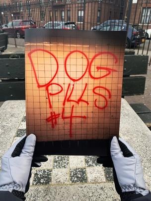 Dog Pills #4