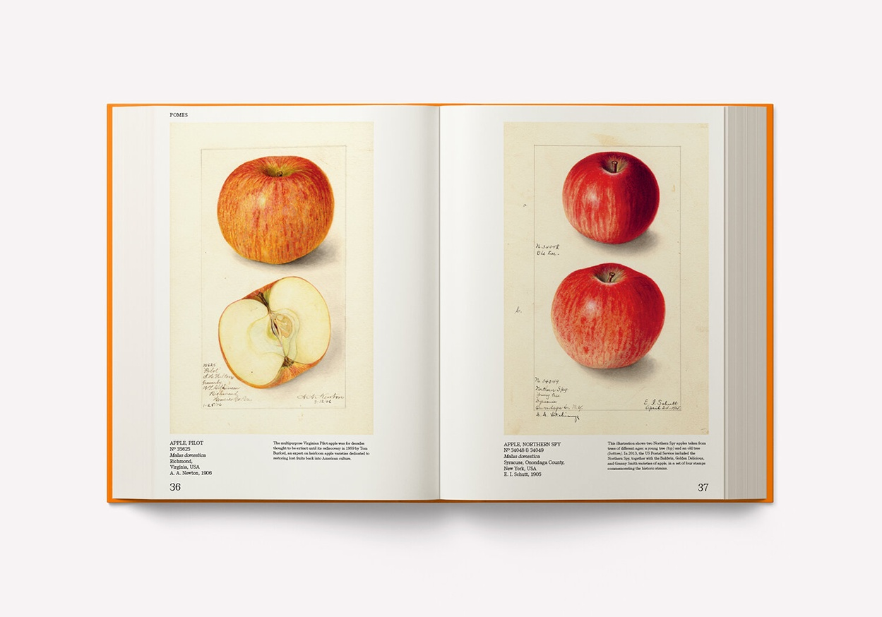 An Illustrated Catalog of American Fruits & Nuts: The U.S. Department of Agriculture Pomological Watercolor Collection thumbnail 3