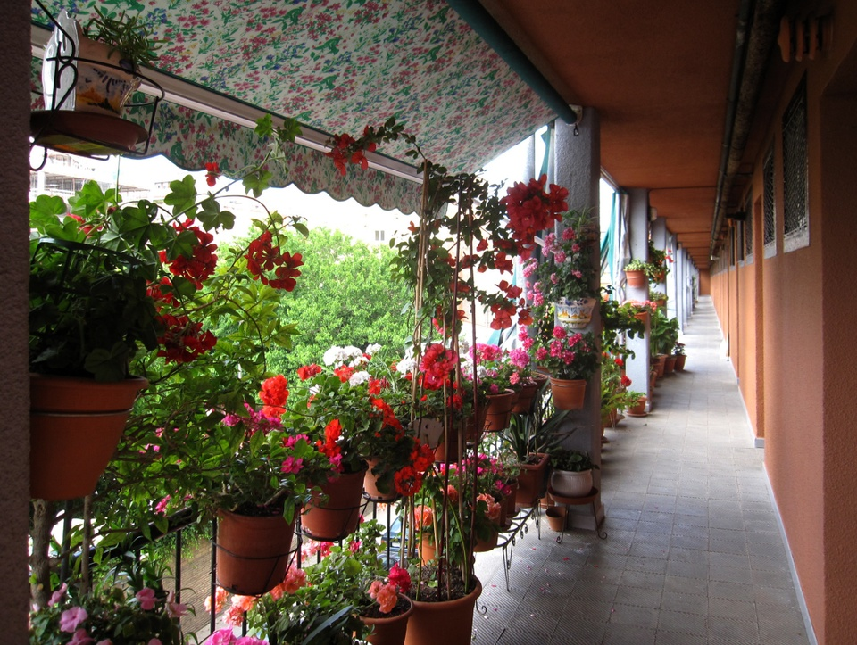 Photo of a covered walkway outside a single-story building; to the left of the walkway are two-level rows of lush plants blooming with red, pink, and white flowers.