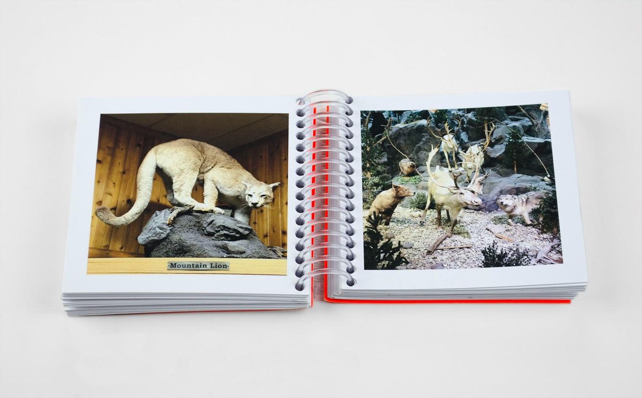 Animals I Shot at Cabela's thumbnail 4