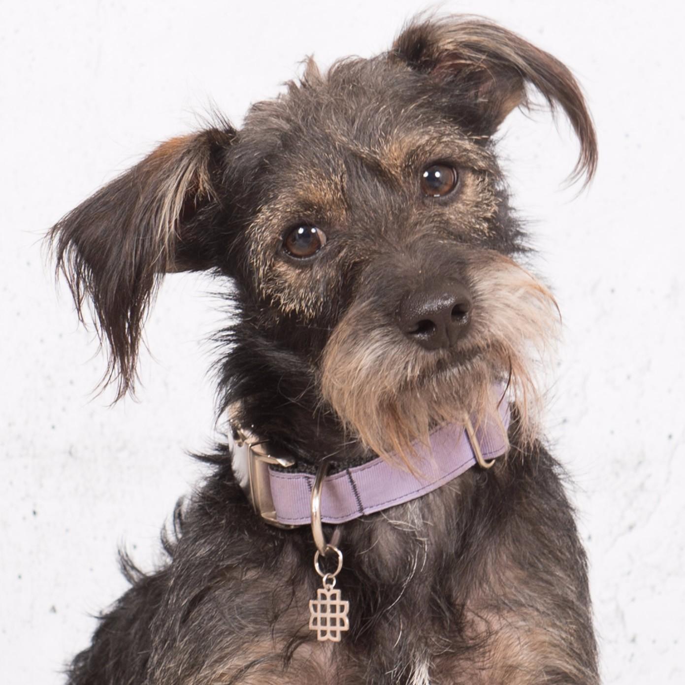Kathy Wetmore Dog Rescue
