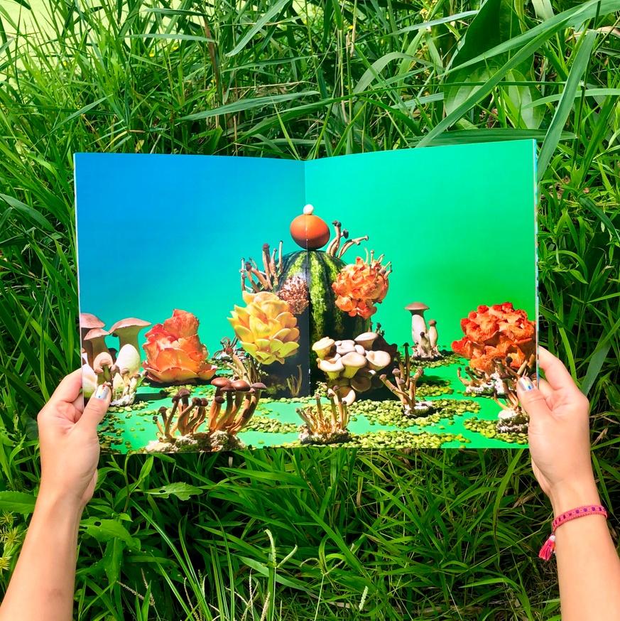 Mushrooms & Friends thumbnail 2