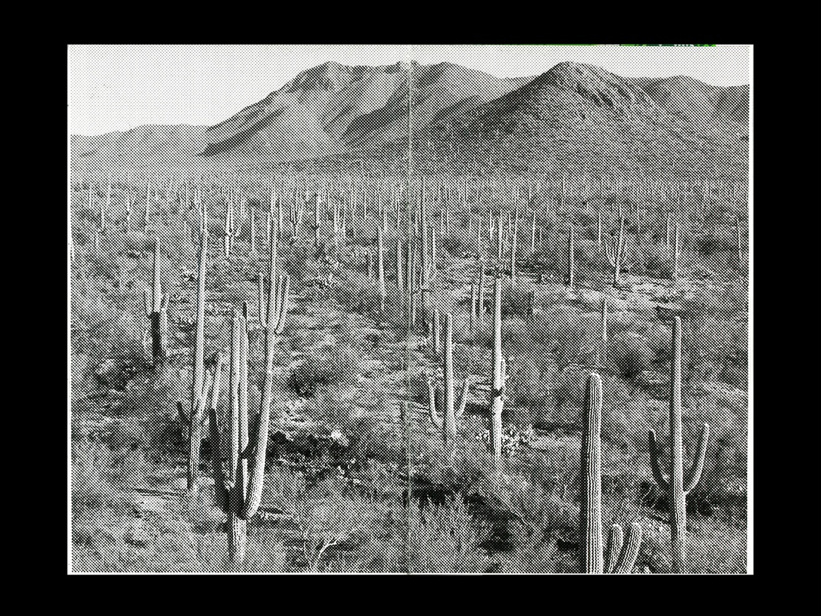 Saguaro thumbnail 4