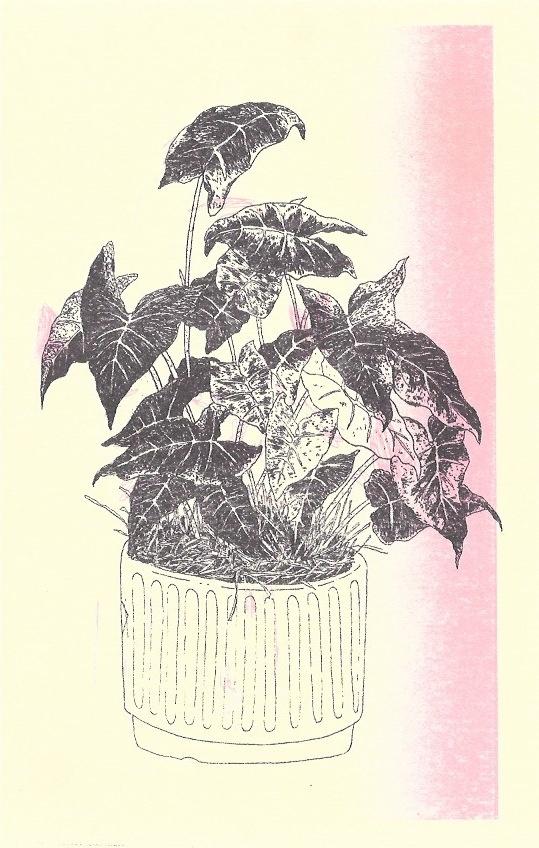 Plantas thumbnail 2