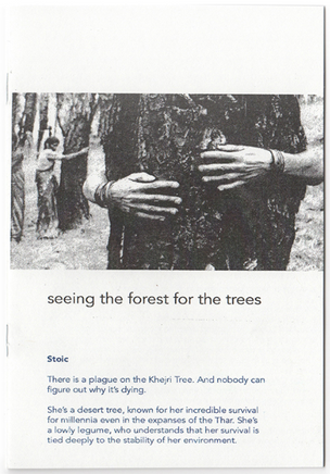 seeing the forest for the trees