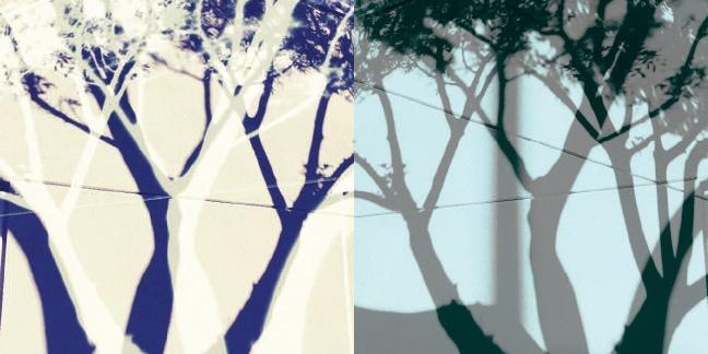 Shadow Trees thumbnail 4