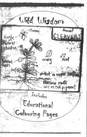 Botanical Anatomy / Wild Wisdom