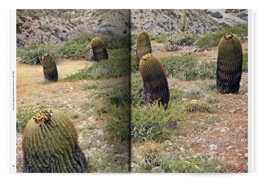 Xerophile: Cactus Photographs from Expeditions of the Obsessed thumbnail 4